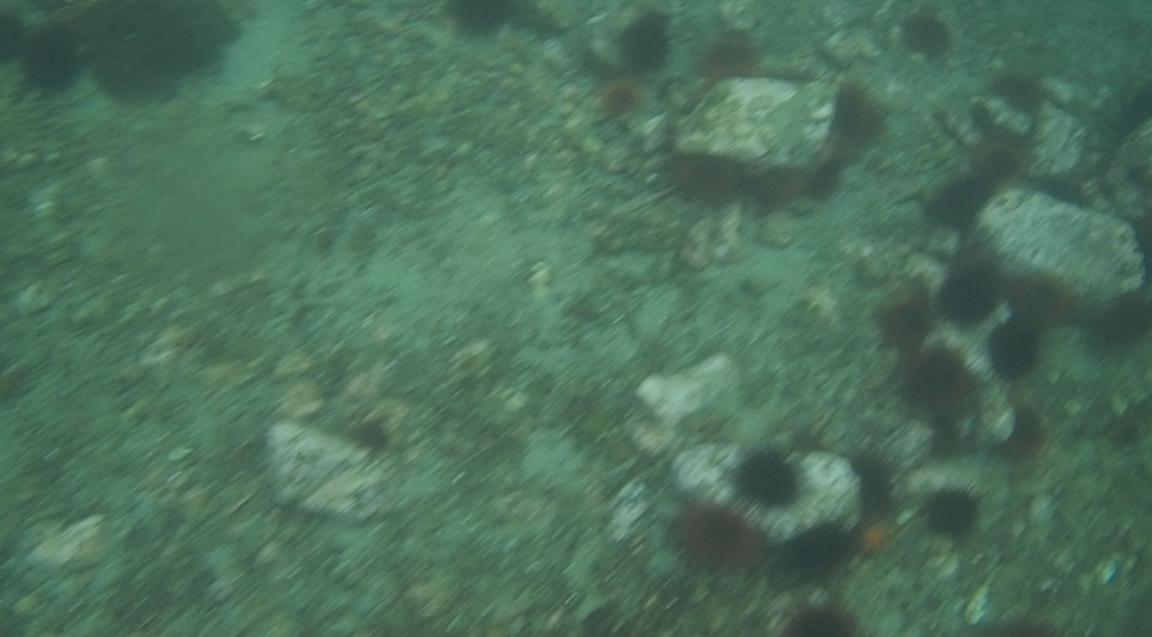 underwater langara island 2 (58).jpg