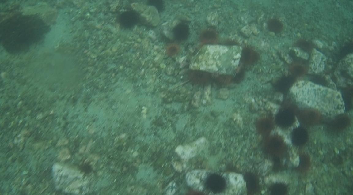 underwater langara island 2 (59).jpg