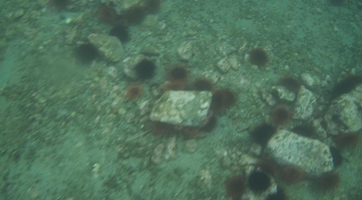 underwater langara island 2 (60).jpg