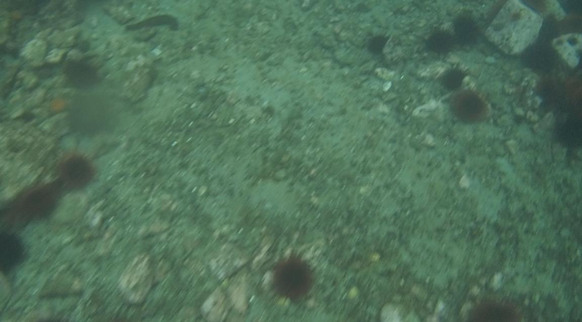 underwater langara island 2 (62).jpg