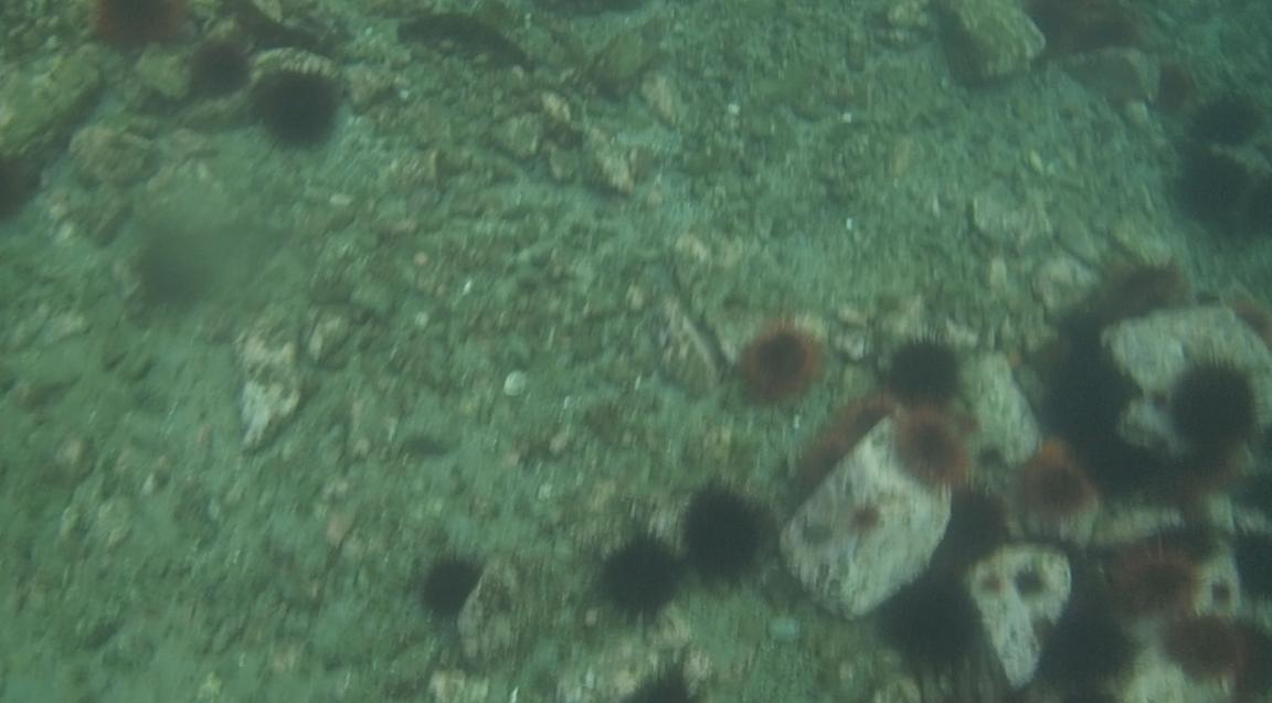underwater langara island 2 (65).jpg