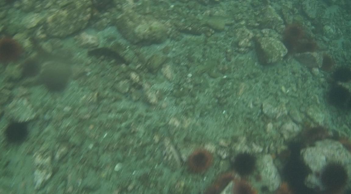 underwater langara island 2 (66).jpg