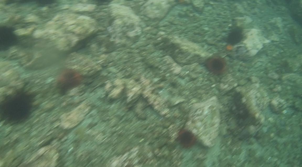underwater langara island 2 (71).jpg