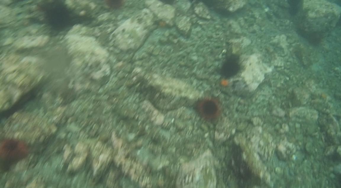 underwater langara island 2 (72).jpg