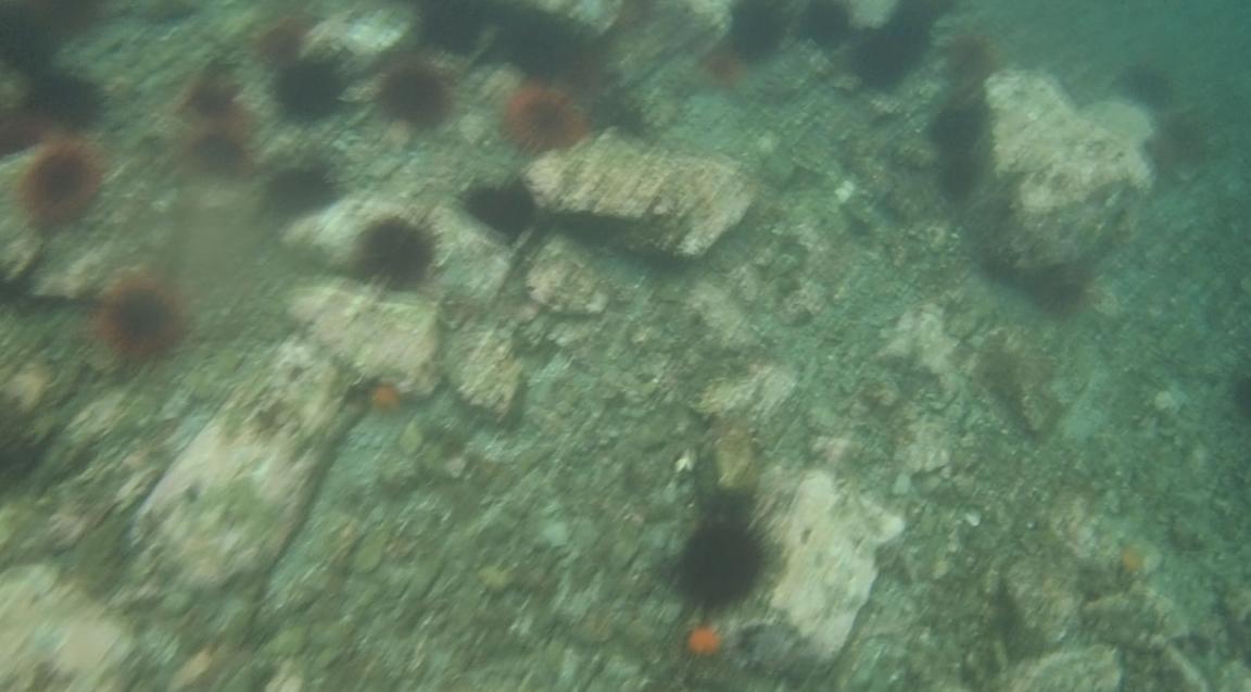 underwater langara island 2 (74).jpg