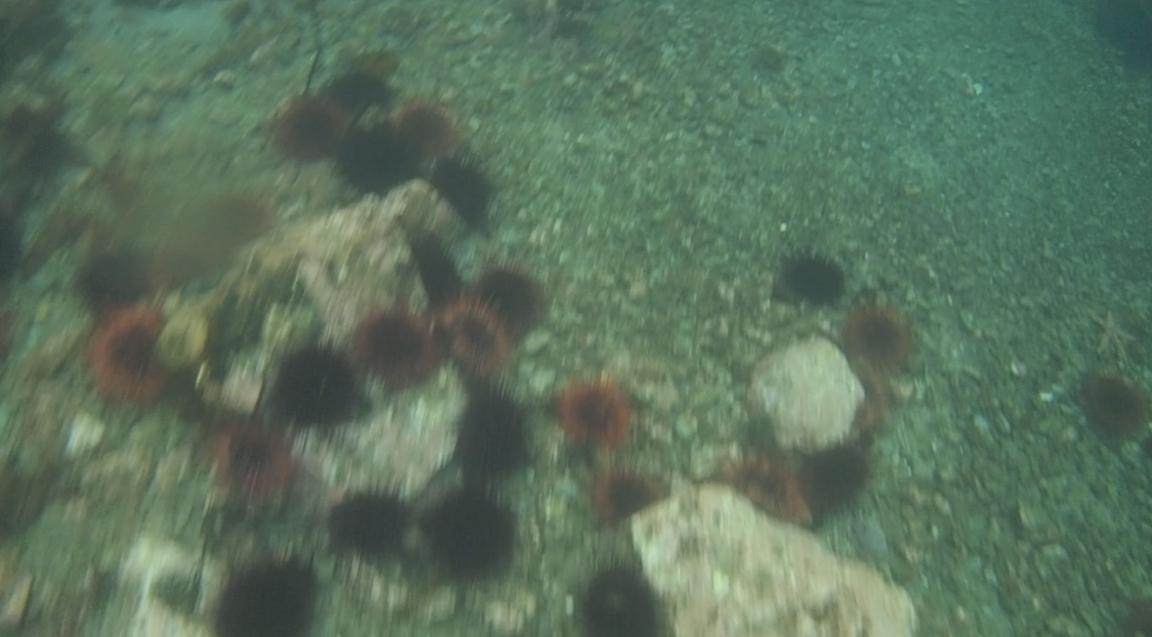 underwater langara island 2 (78).jpg