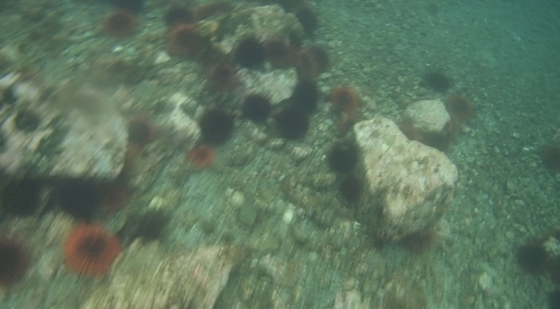 underwater langara island 2 (76).jpg