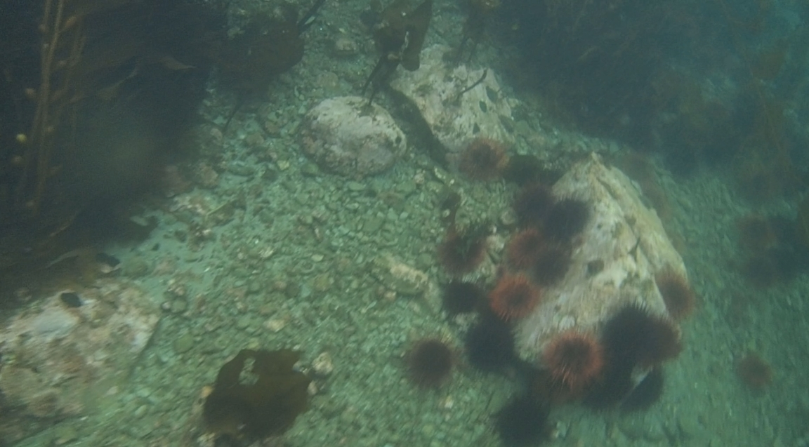 underwater langara island 2 (83).jpg