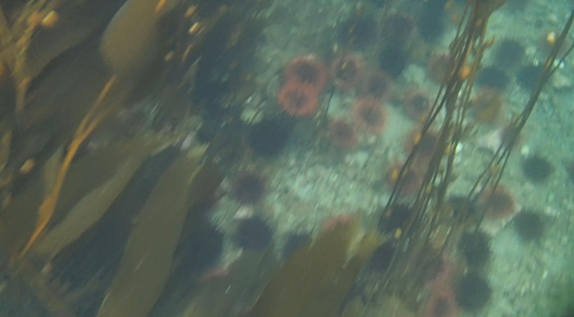 underwater langara island 2 (91).jpg