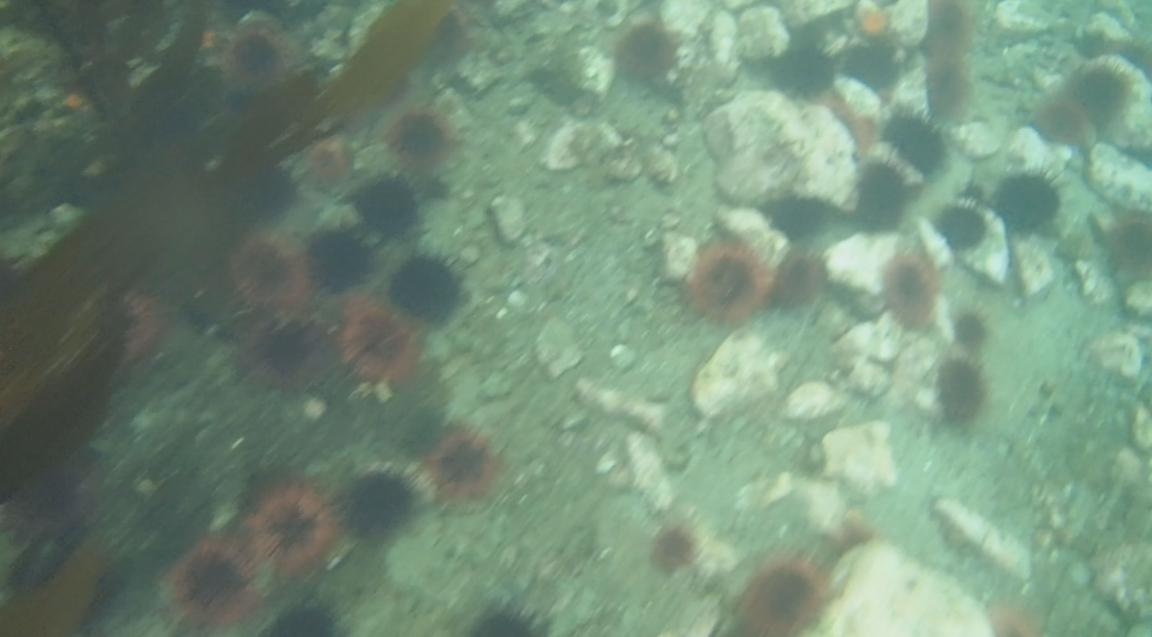 underwater langara island 2 (100).jpg