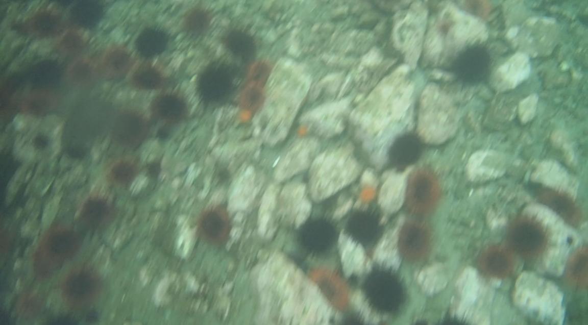 underwater langara island 2 (104).jpg
