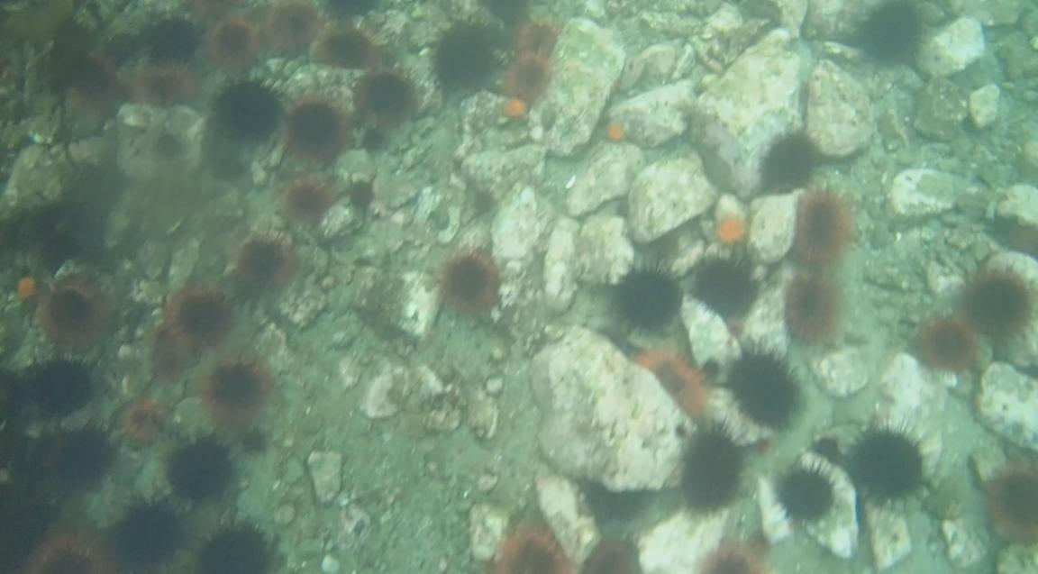 underwater langara island 2 (103).jpg