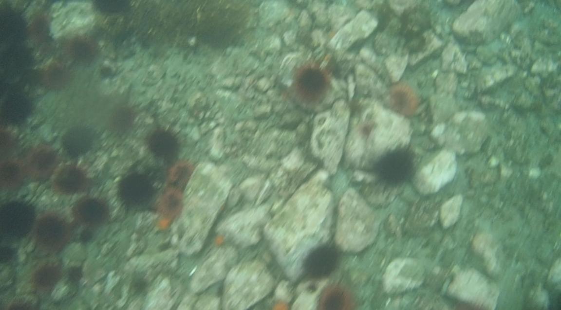 underwater langara island 2 (105).jpg