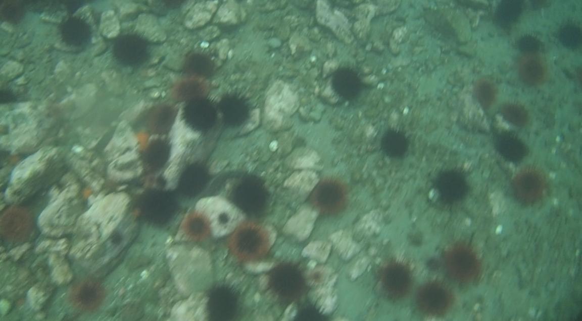 underwater langara island 2 (110).jpg