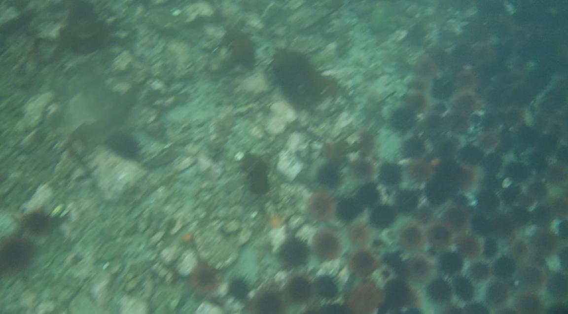 underwater langara island 2 (124).jpg
