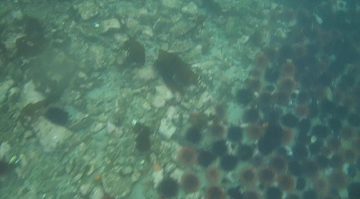 underwater langara island 2 (125).jpg