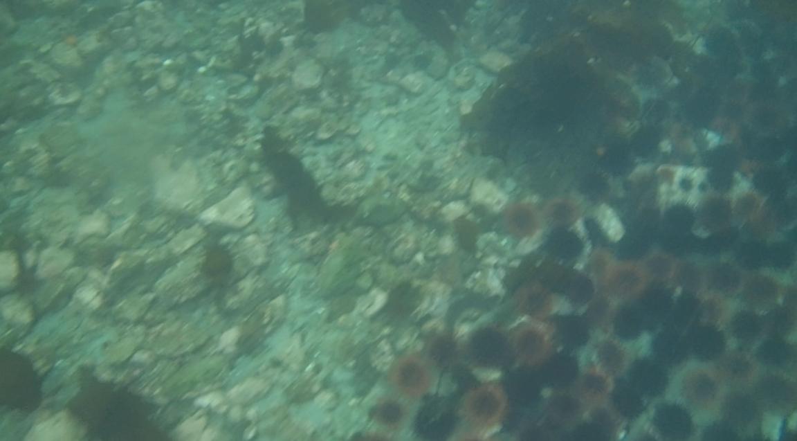 underwater langara island 2 (129).jpg