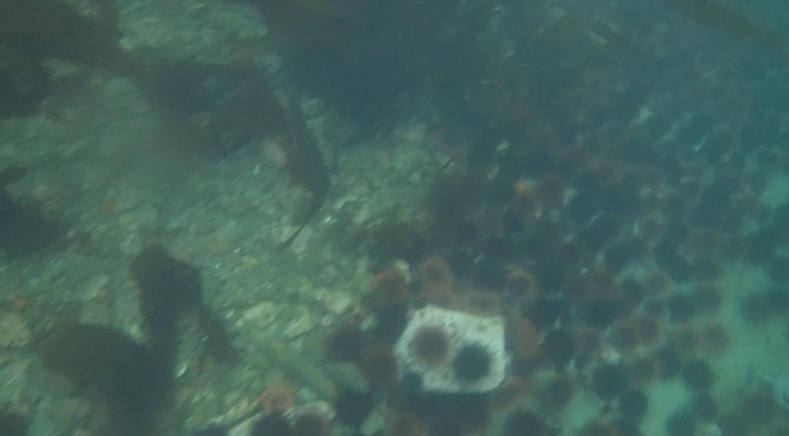 underwater langara island 2 (137).jpg