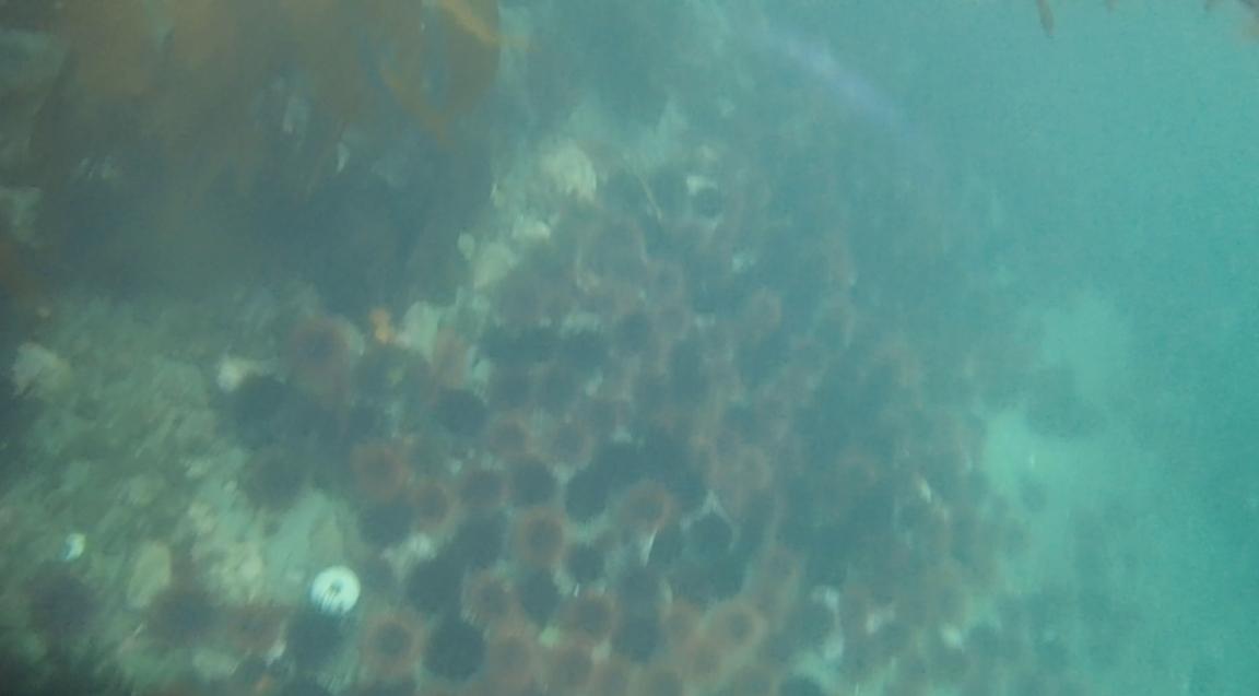 underwater langara island 2 (147).jpg