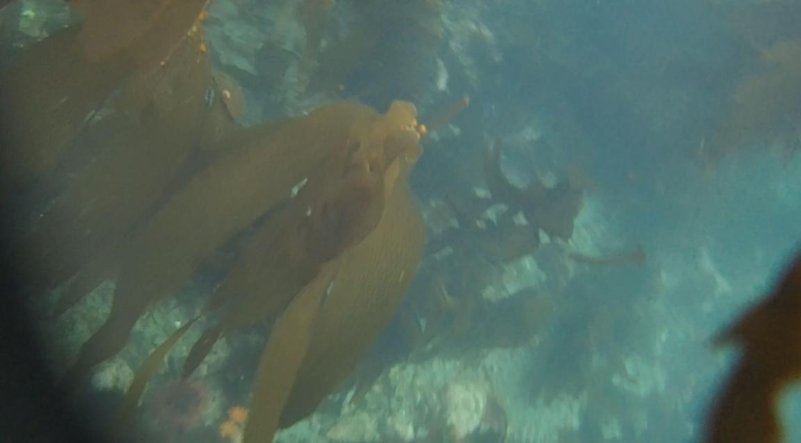 underwater langara island 2 (149).jpg