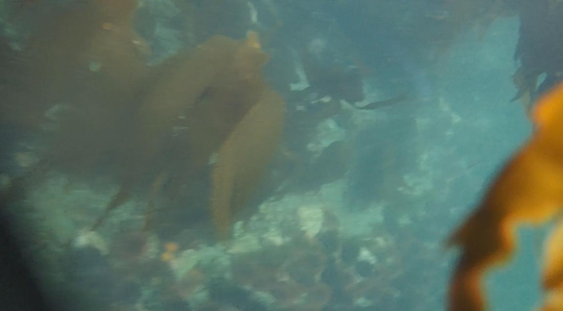 underwater langara island 2 (148).jpg