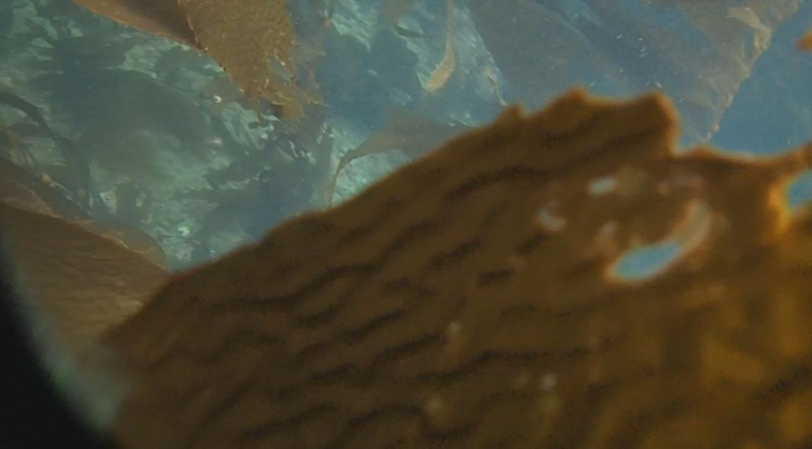 underwater langara island 2 (153).jpg