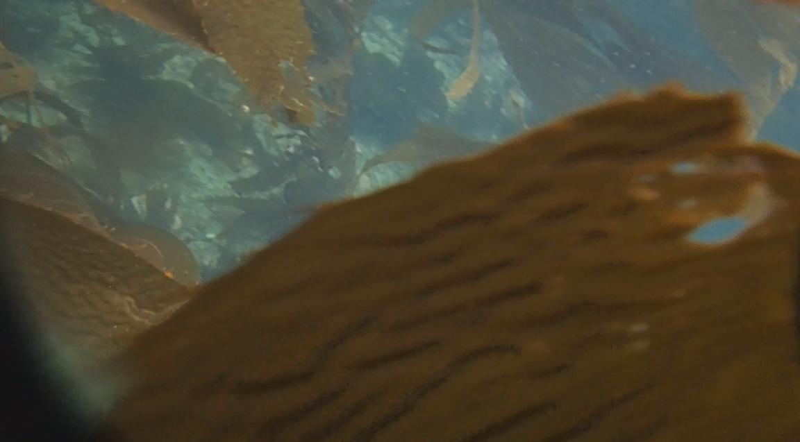 underwater langara island 2 (154).jpg