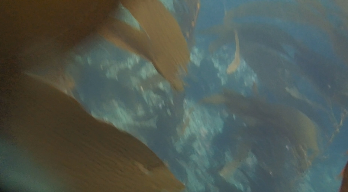 underwater langara island 2 (156).jpg