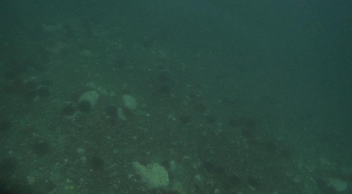 underwater langara island 2 (165).jpg