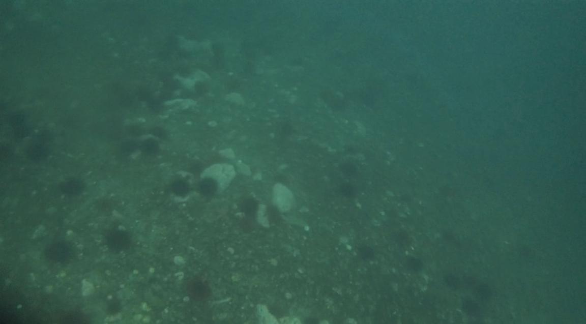 underwater langara island 2 (167).jpg