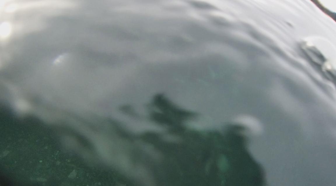 underwater langara island 2 (168).jpg