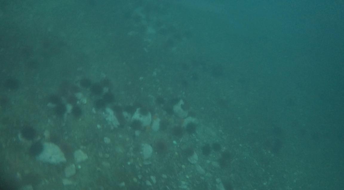 underwater langara island 2 (170).jpg