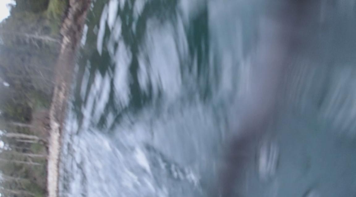 underwater langara island 2 (175).jpg