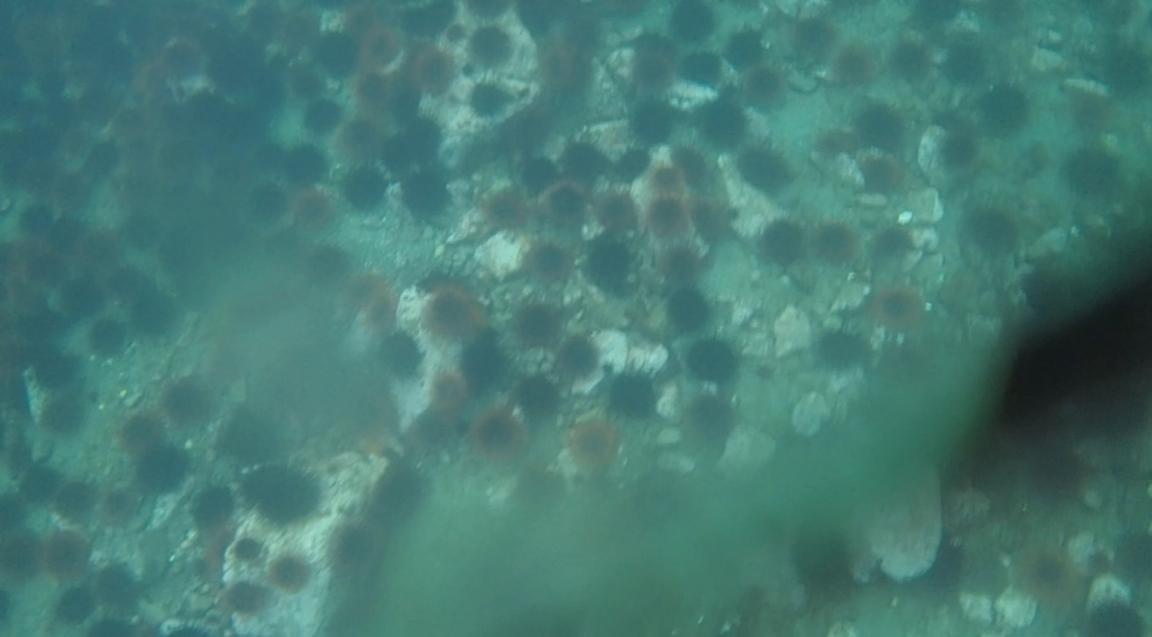 underwater langara island 2 (192).jpg