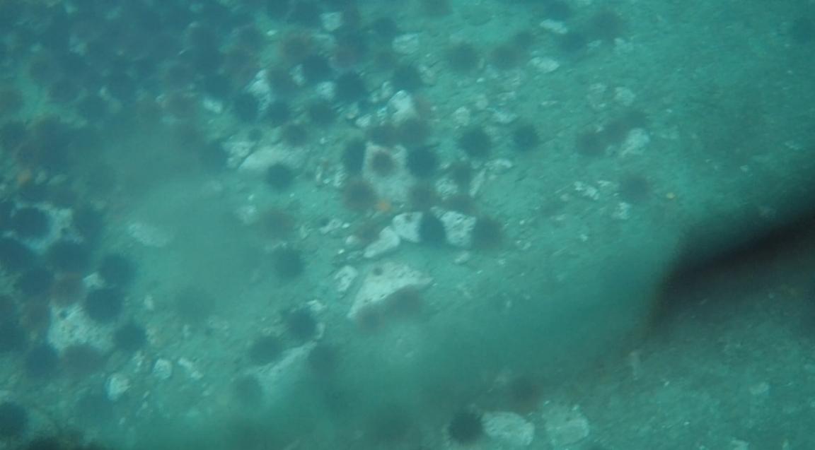 underwater langara island 2 (204).jpg