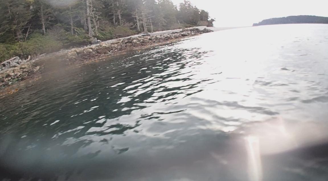 underwater langara island 2 (207).jpg