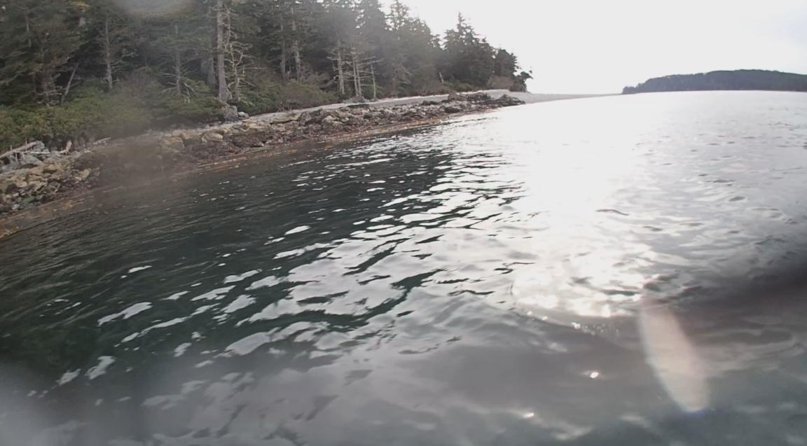 underwater langara island 2 (208).jpg