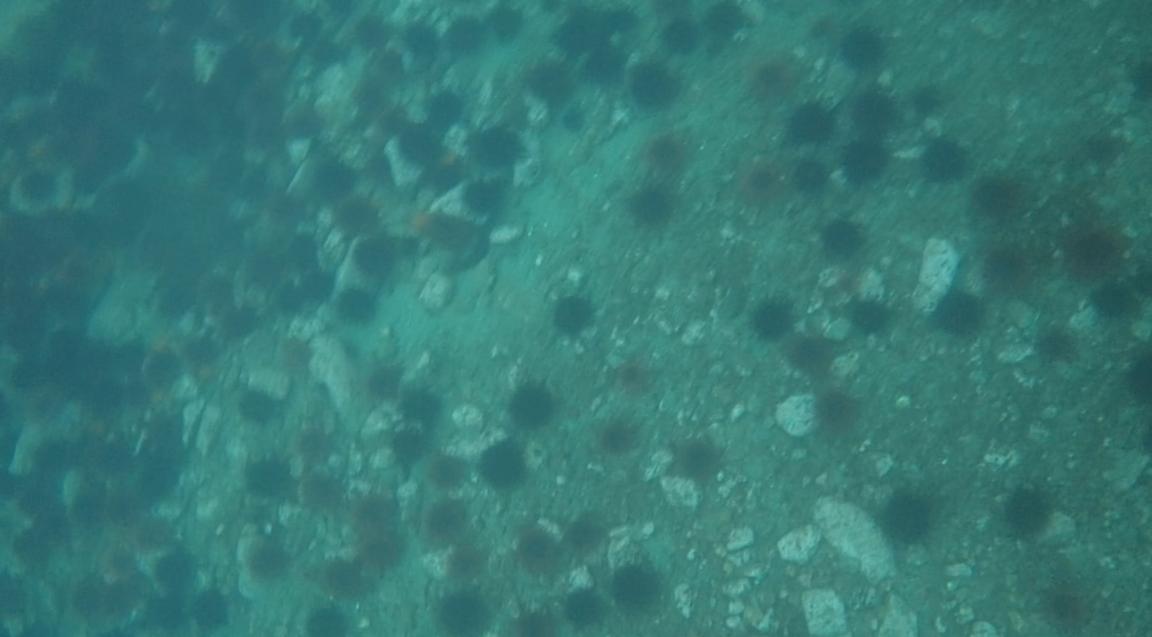 underwater langara island 2 (231).jpg