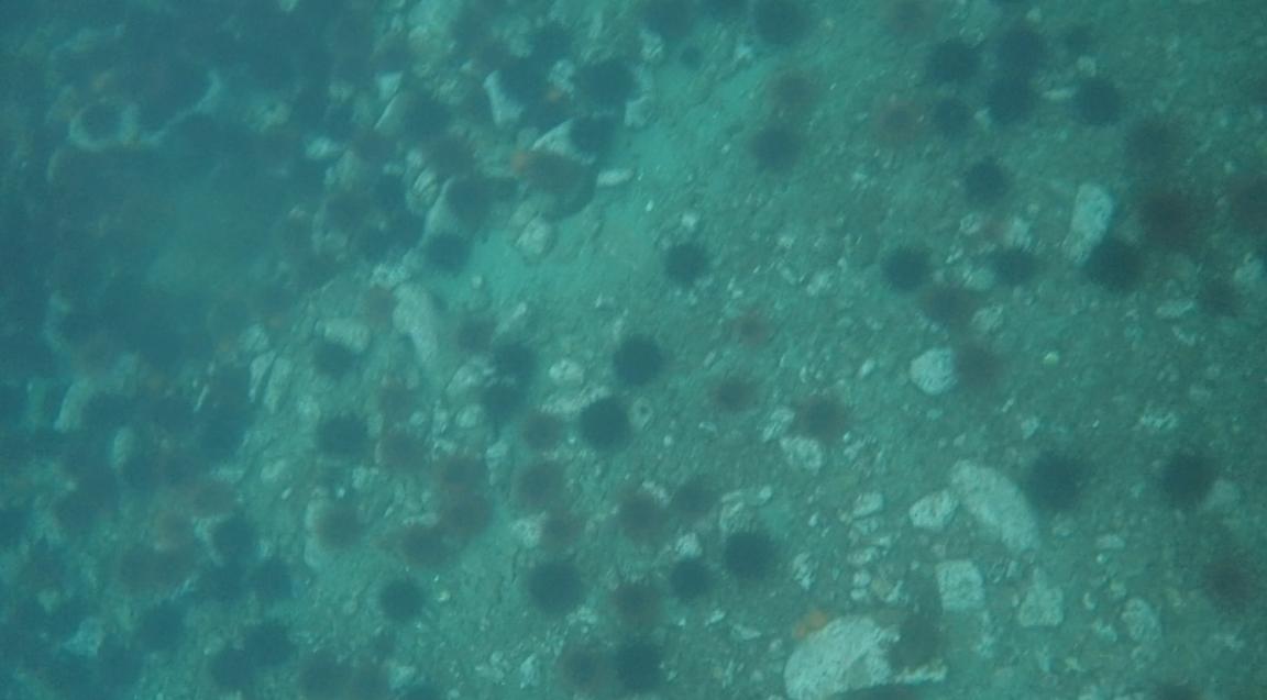 underwater langara island 2 (230).jpg