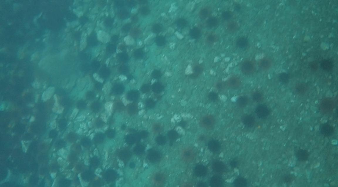 underwater langara island 2 (235).jpg