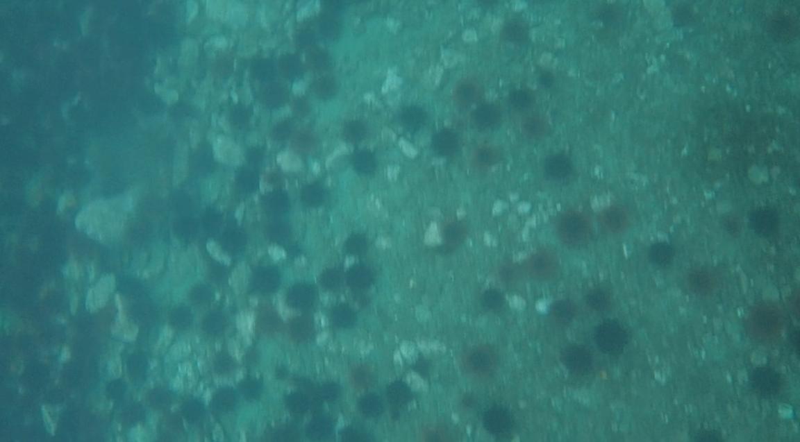 underwater langara island 2 (236).jpg