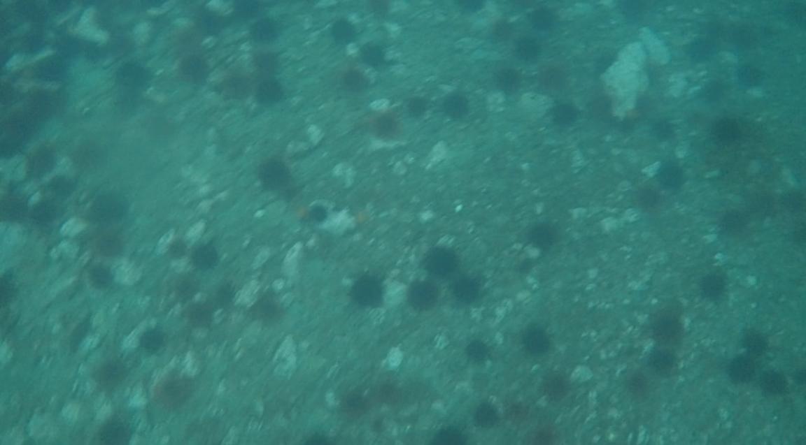 underwater langara island 2 (240).jpg