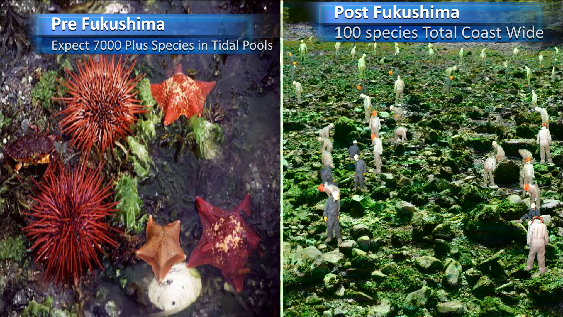 Fukushima Story 336.jpg