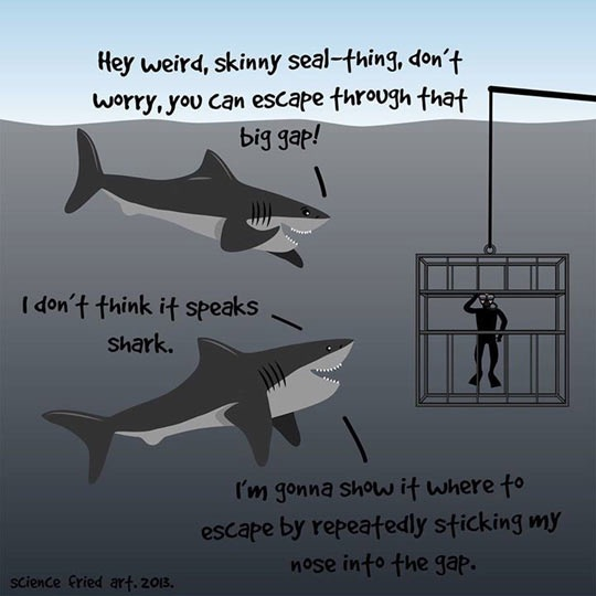 Sharks conferring about how to rescue a diver from the horrible confinement of that cage he's stuck in