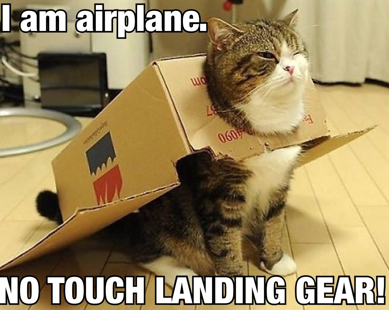 "Cat poking his head out a hole in the side of an upside down box that's ""flaps out.""  Caption: ""I am airplane. NO TOUCH LANDING GEAR!"""