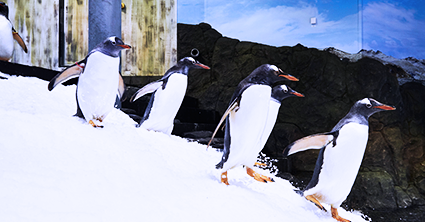 MERLIN PENGUIN EXPEDITION