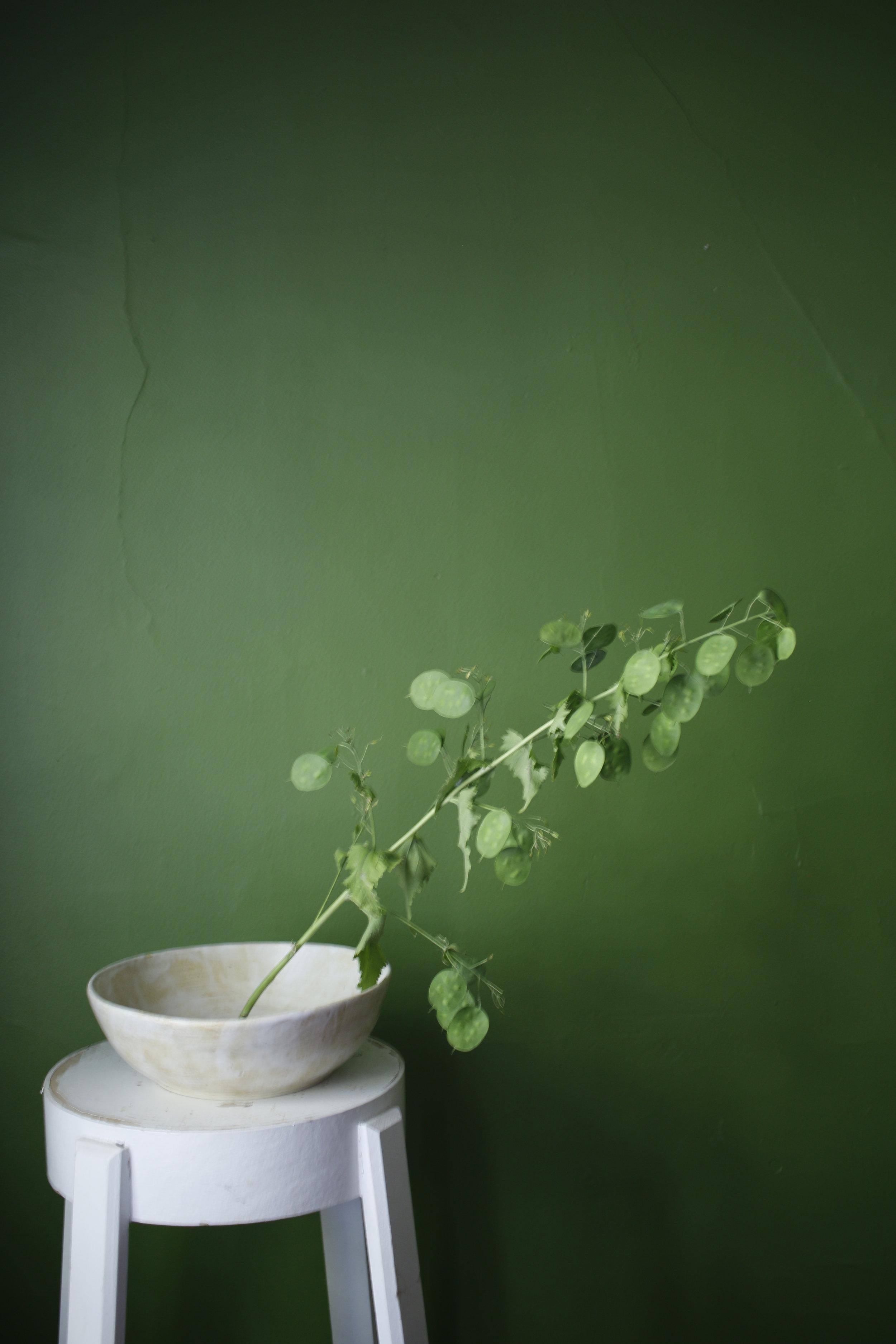 chinesemoneyplant.jpg