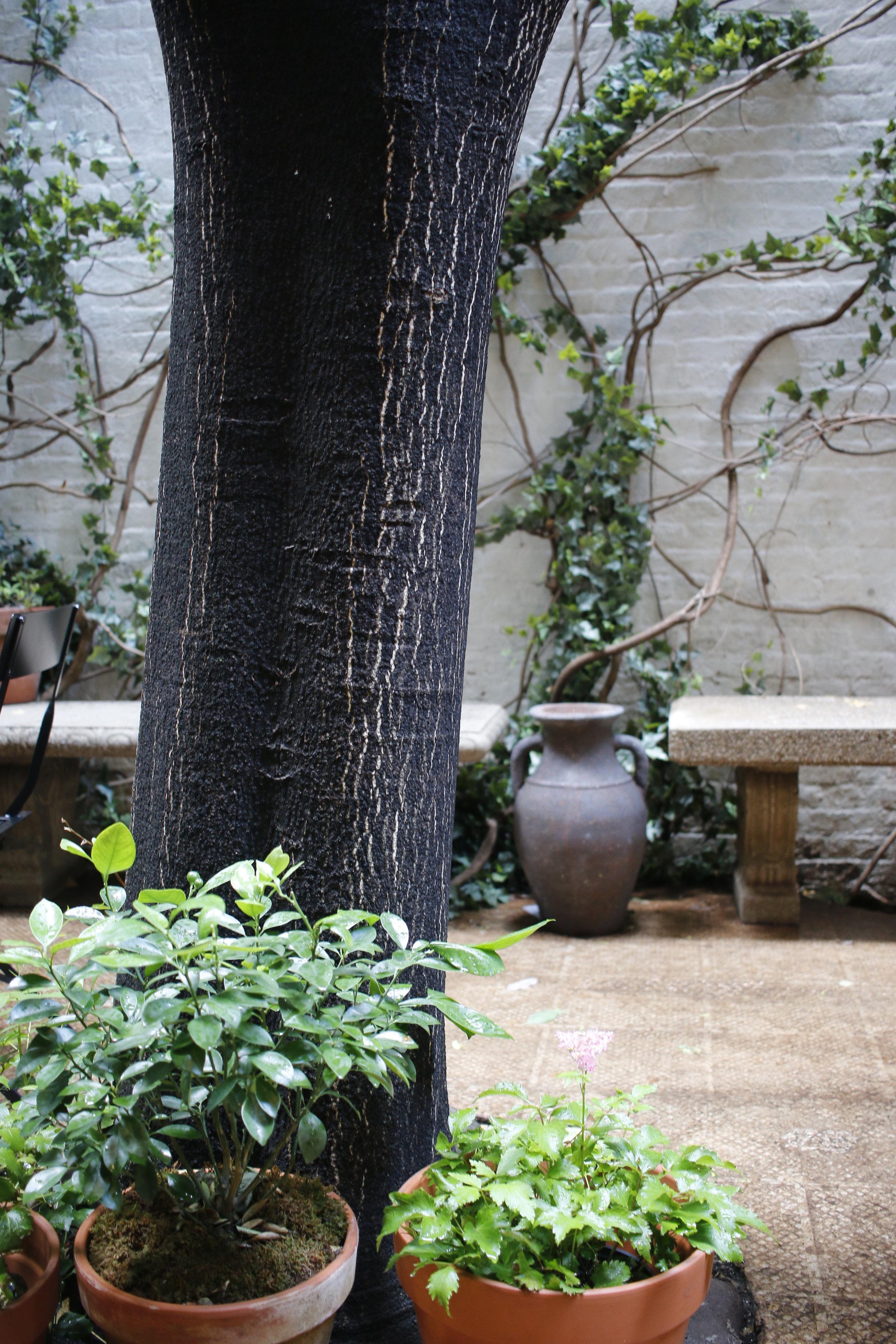gardenprogress2.jpg
