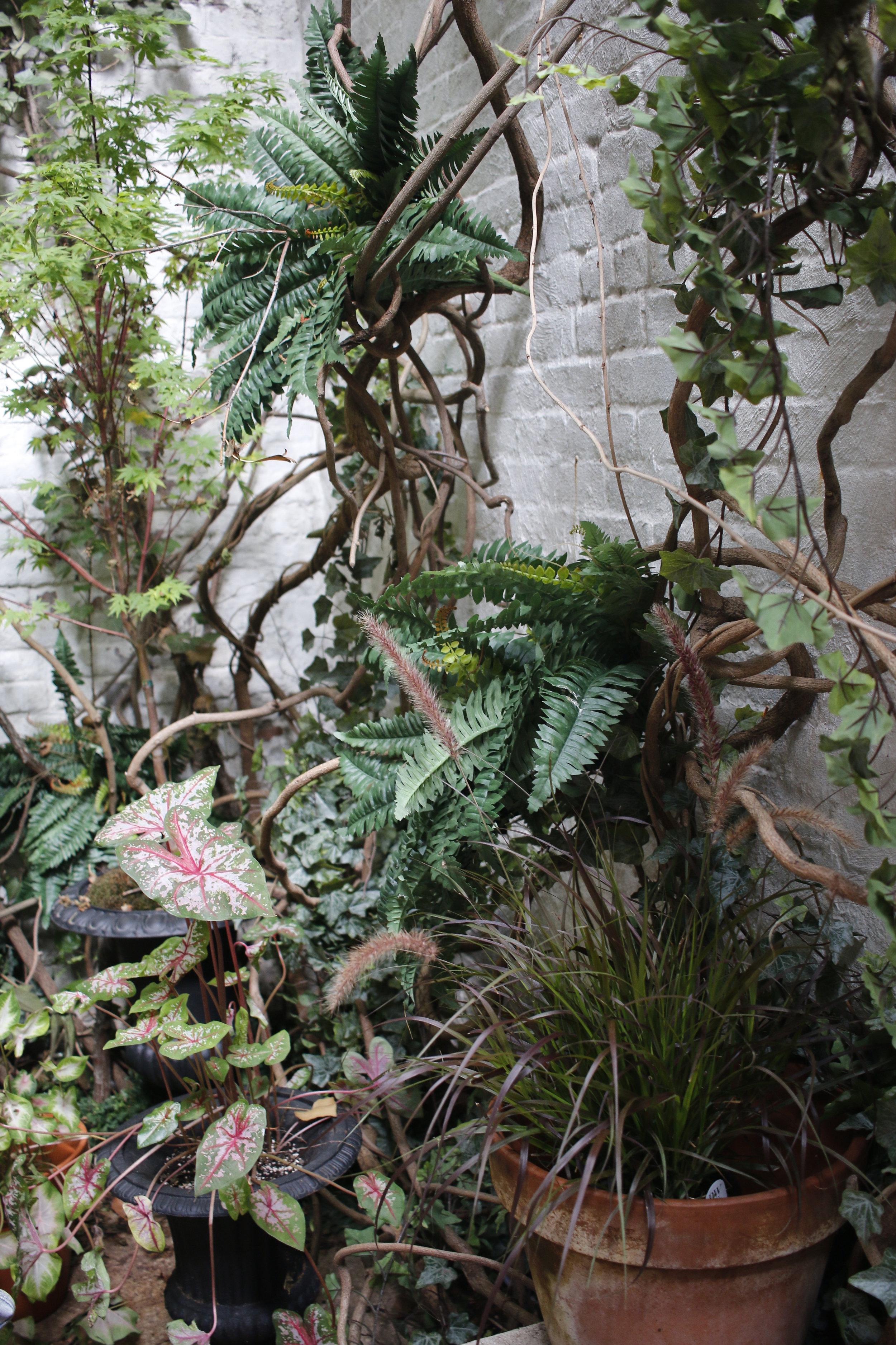 TRRcourtyardmaplegrasscaladium.jpg