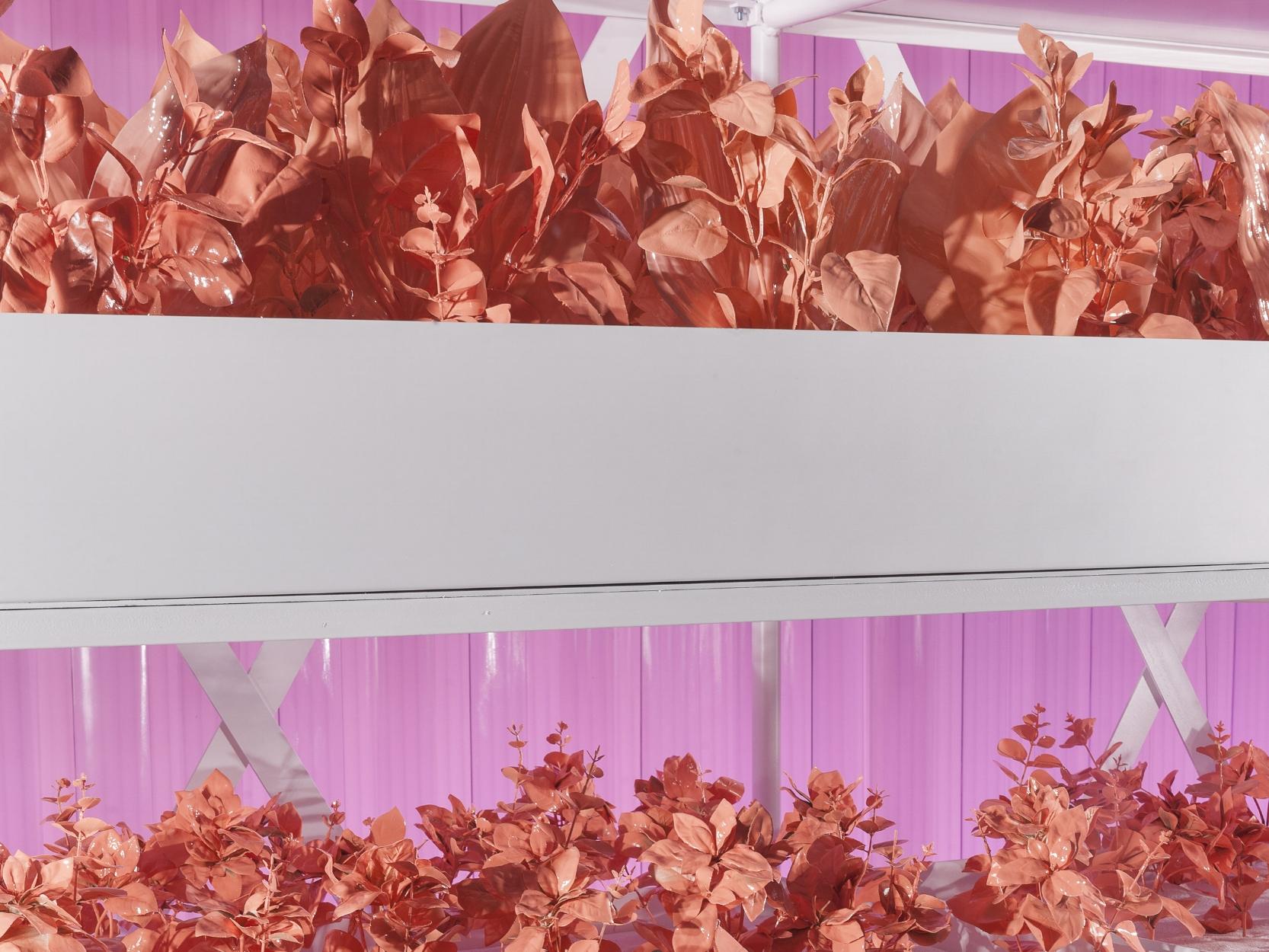 Selfridges, Radical Luxury, Propability, Growing Beauty VM3.jpg
